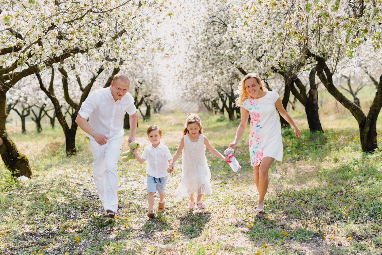 rodina vo visnovom sade,prechadzka sadom, jarne stromy, kvitnuce kvety
